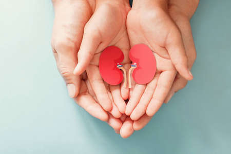Photo pour Adult and child holding kidney shaped paper, world kidney day, National Organ Donor Day, charity donation concept - image libre de droit