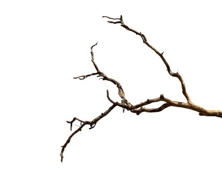 Photo pour Dry branch of dead tree with cracked dark bark.beautiful dry branch of tree isolated on white background.Single old and dead tree.Dry wooden stick from the forest isolated on white background . - image libre de droit