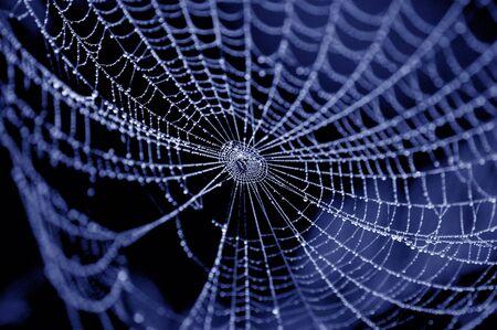 Photo pour spider on web covered by water drops - image libre de droit