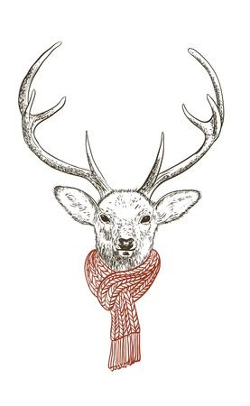 Pen and ink illustration of deer in scarf