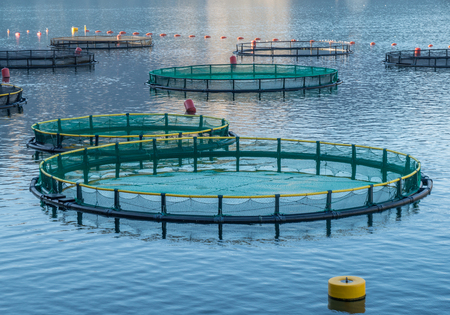 Photo for Big Cages for fish farming in Montenegro - Royalty Free Image