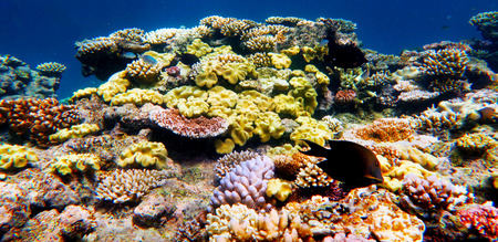 Marine life at the Great Barrier Reef Queensland Australia