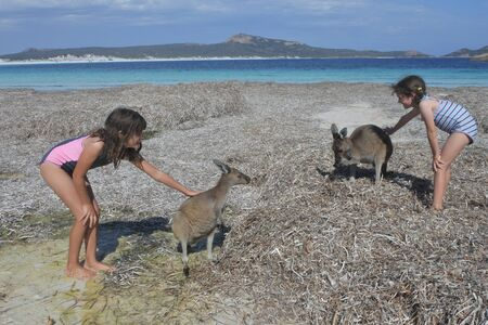 Young Australian girl playing with Kangaroos in Lucky Bay in Cape le grand in Western Australia