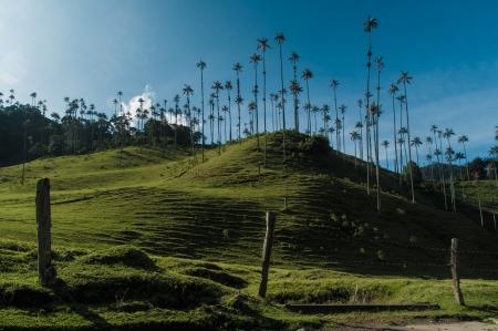 Coffee triangle landscape in Valle de Cocora near Salento in Colombia