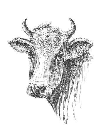 Ilustración de Face of Cow hand drawn on white background - Imagen libre de derechos