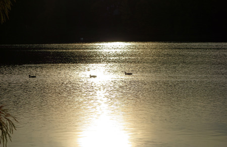 3 ducks in sunlight