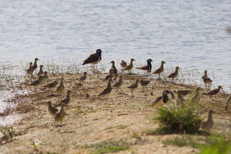 Photo pour small out focused birds sitting on the banks at the distance - image libre de droit