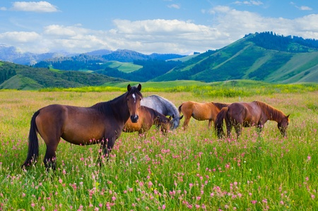 The herd of horses is grazed on a summer green meadow