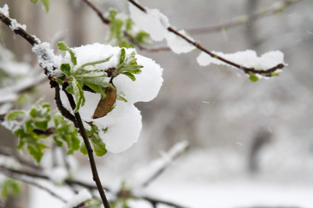 Snow has fallen sharply in the spring. Broken trees, branches, wiring. Storm, wind, cyclone.