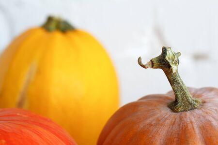 Photo pour Close up autumn pumpkins on thanksgiving table, white brick backdrop, selective focus - image libre de droit