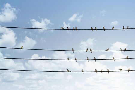 Photo for Individuality concept, one bird standing out from the crowd of other birds on the power line - Royalty Free Image