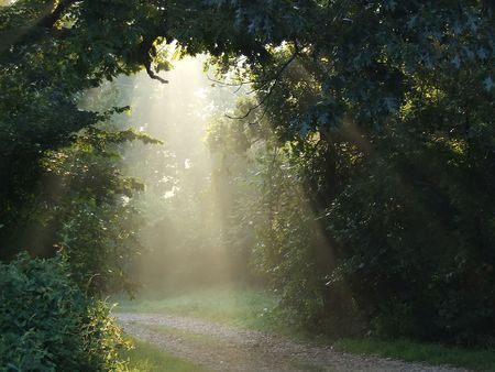 Misty sunlight lighting a forest trail