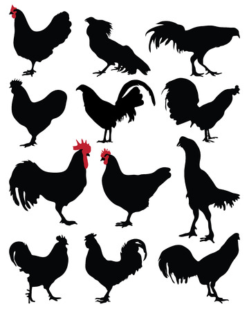 Black silhouette of a roosters and hens, vector
