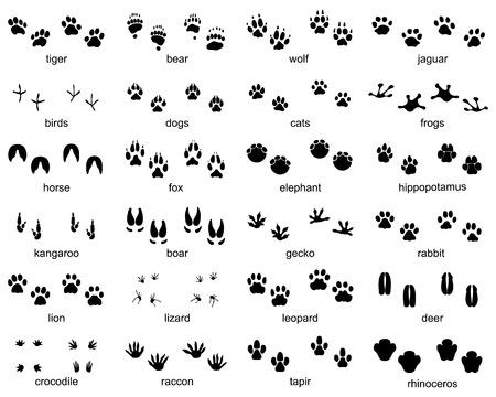 Foto de Set of footprints of wild animals on a white background - Imagen libre de derechos