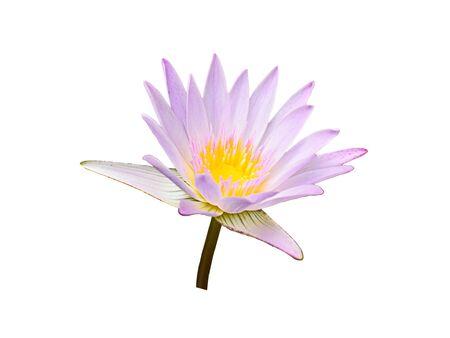 Photo pour Lotus flower isolated on white background. - image libre de droit