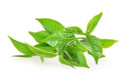 Photo pour Fresh tea leaves on a white background - image libre de droit
