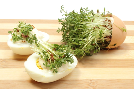 Halves of egg with mayonnaise and fresh green cress, fresh cuckoo-flower in eggshell lying on wooden cutting board, watercress, Easter decoration