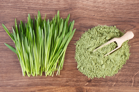 Foto per Barley grass and heap of young powder barley with wooden scoop - Immagine Royalty Free