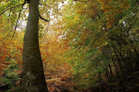 Forest in El Montseny