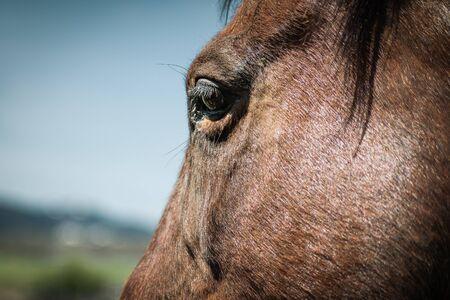 Photo pour Close-up focus on a brown horse`s eye against a blue sky and bokeh background. - image libre de droit