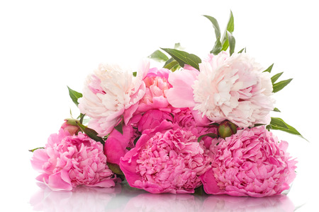 Photo for beautiful pink peonies on a white background - Royalty Free Image