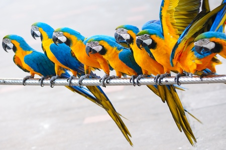 Parrot birds standing in a row