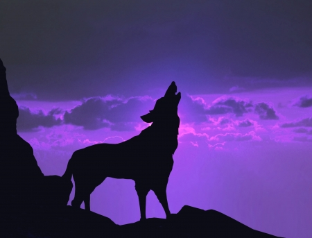 Wolf howling on mountain cliff