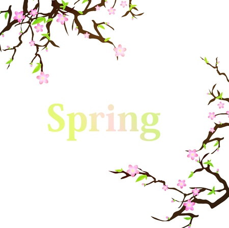 spring background with sakura and copyspace