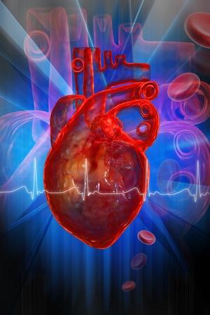 Human heart with ECG