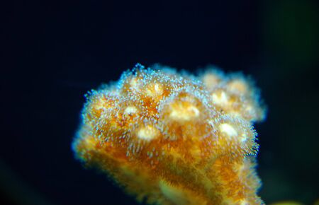 Foto per Close-up photo of coral reef - Immagine Royalty Free