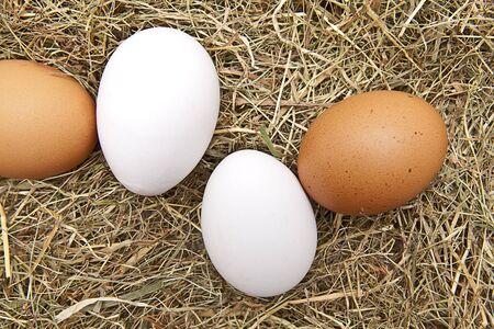 brown and white eggs on hay