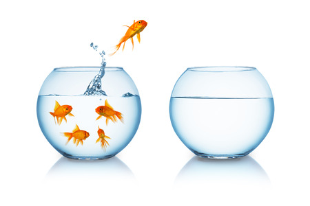 goldfish jumps in to a fishbowl in to liberty isolated on white background