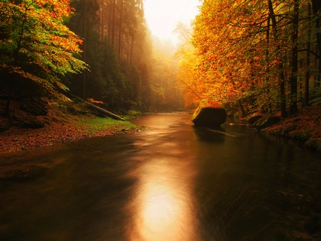 Photo pour Stony bank of autumn mountain river covered by orange beech leaves. Fresh green leaves on branches above water make reflection - image libre de droit