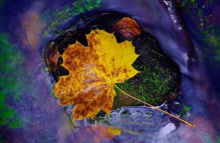 Leaf in shinning drops of mountain stream. Drops lightpainting. Detail of rotten yellow maple leaf lay on dark stone in blurred mirror waterの素材 [FY310137673788]