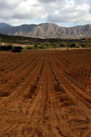 Vineyards in the Valle de Guadalupe, Mexico