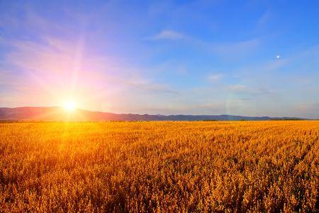 Photo pour Sunrise in the field - image libre de droit