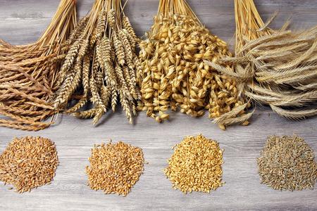 Getreidegarben mit Saat
