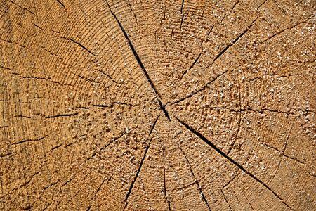 Annual rings in wood
