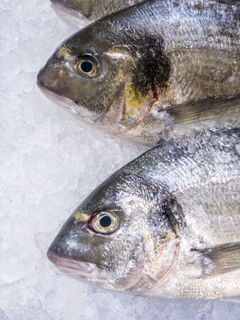 Photo pour Close Up of fresh sea bream in a supermarket refrigerated display case. Uncooked fresh seafood. Fresh gilt-head fish on ice at market store shop. Sea food concept - image libre de droit