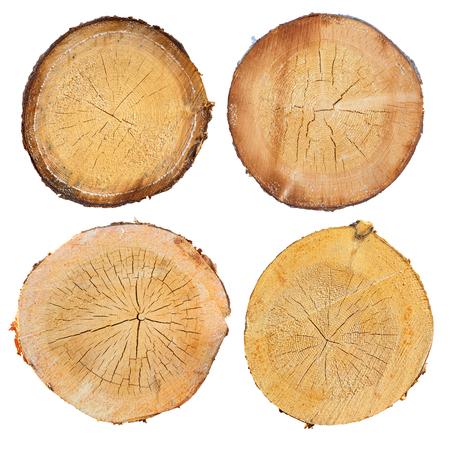 Photo pour tree in a cut on a white background - image libre de droit