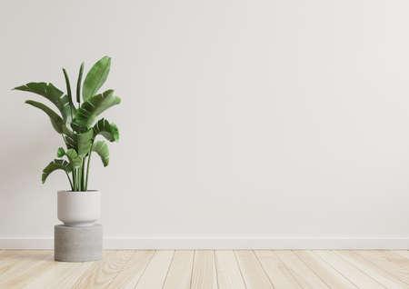 Photo pour Empty room white walls with beautiful plants sideways on the floor.3d rendering - image libre de droit