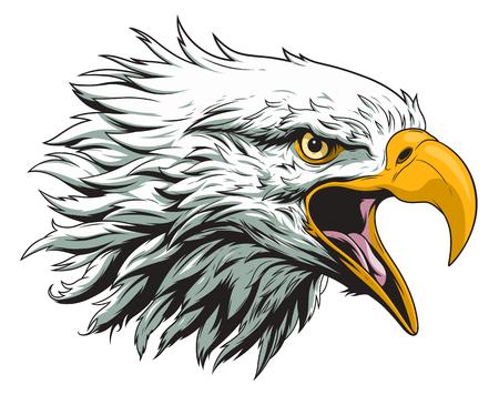 Illustration for Bald eagle head - Royalty Free Image