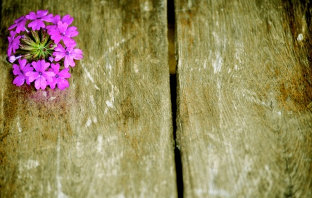 Purple flower wooden slat background