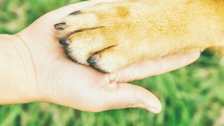 Dog paw and human hand doing handshake outdoor, concept of friendship.