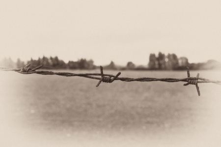 Foto per Barbed wire and a forest in the background, as in an old postcard - Immagine Royalty Free