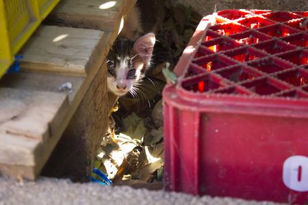 Foto de Street kitten hidden in a wooden pallet - Imagen libre de derechos