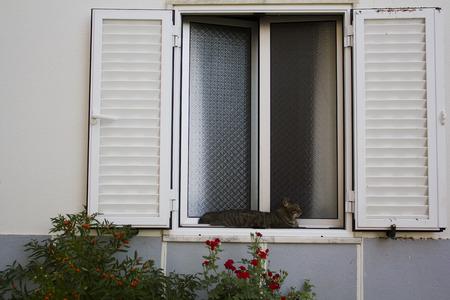 Foto de Cat lying in a white window with red flowers - Imagen libre de derechos