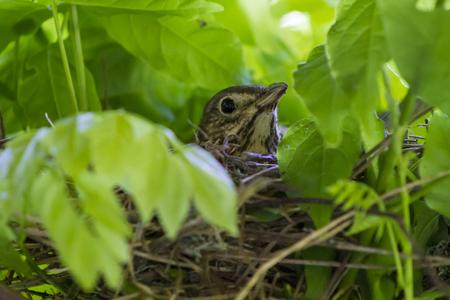 Foto de Fantail bird close up - Imagen libre de derechos