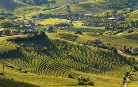 The Vineyards of Langhe