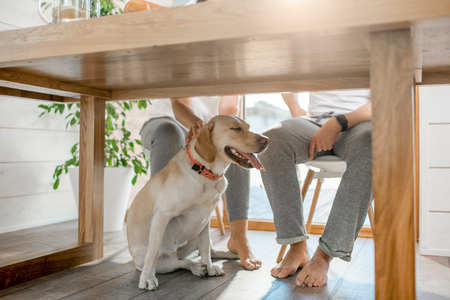 Photo pour Happy dog sitting under the table with legs of the couple at home - image libre de droit